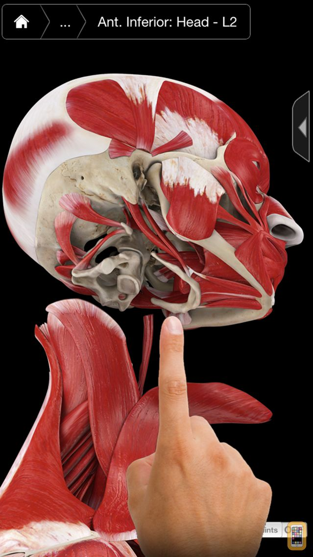Screenshot - Muscle System Pro III - iPhone