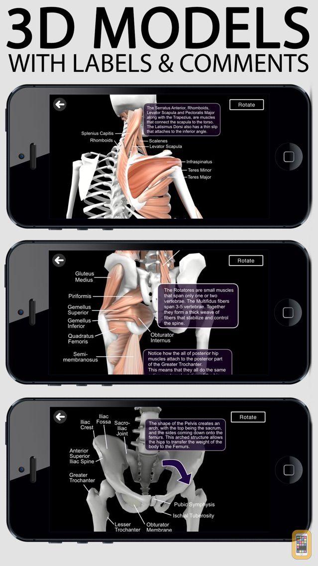 Screenshot - Learn Muscles: Anatomy
