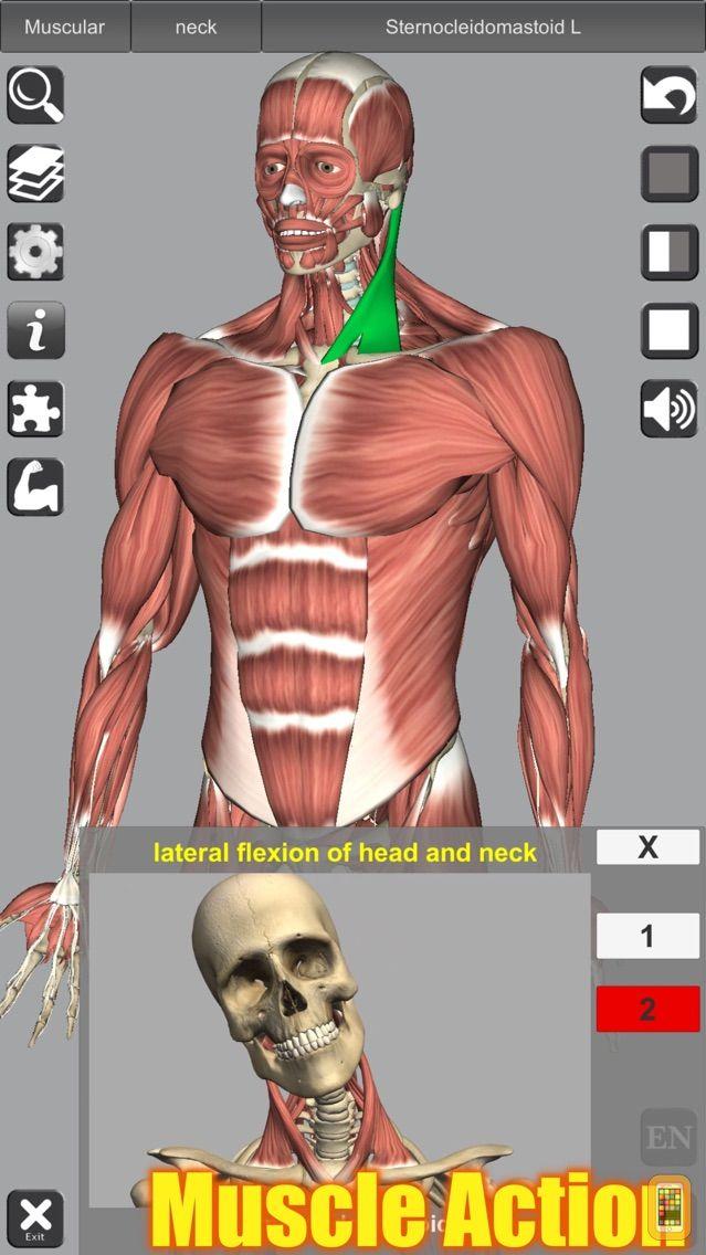 Screenshot - 3D Anatomy