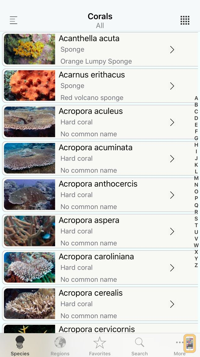 Screenshot - Corals, by Reef Life
